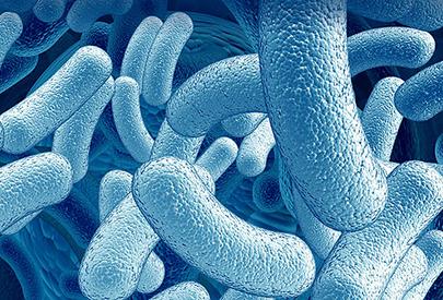 Qué són els probiòtics?