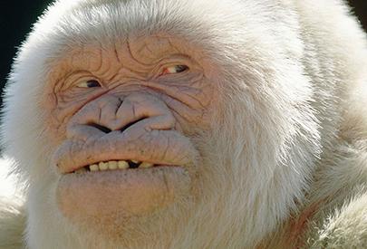 Genòmica evolutiva: del Neandertal al secret del Floquet de Neu