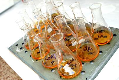 1 milió de clons: introducció al conreu in-vitro d'espècies vegetals