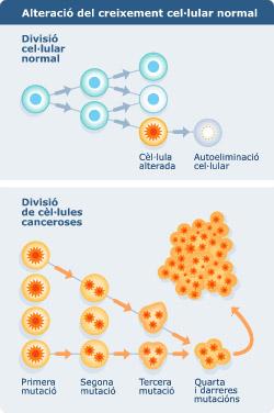 La bioinformàtica en la lluita contra el càncer