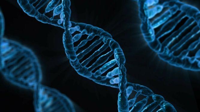 Genètica i malalties neurodegeneratives: l'exemple de l'Alzheimer