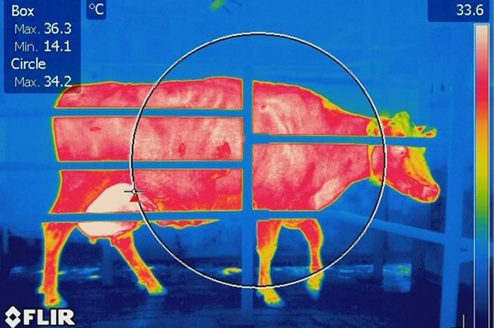 Ús de la termografia per detectar dolor en animals