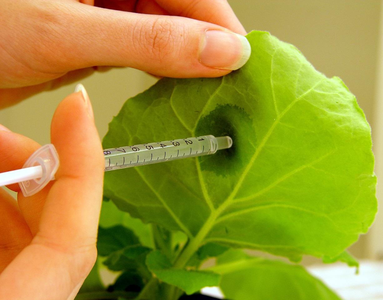 Les plantes també es posen malaltes