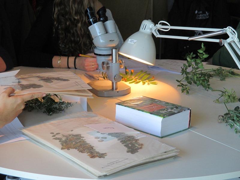Sortida d'observació de flora al·lòctona i taller d'identificació de plantes vasculars mediterrànies