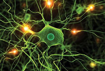 Cervell de plastilina
