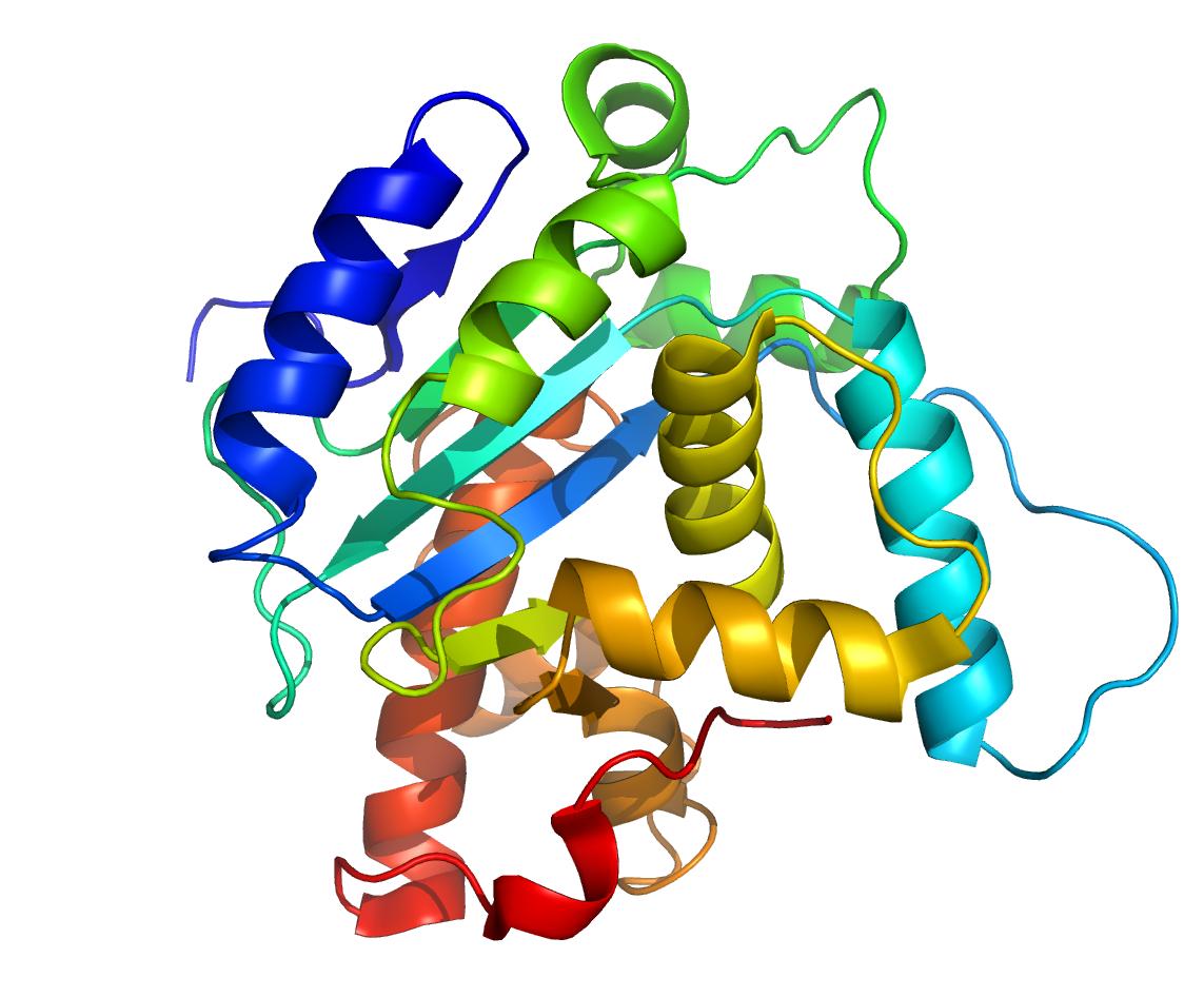 Les proteïnes: els maons de la vida